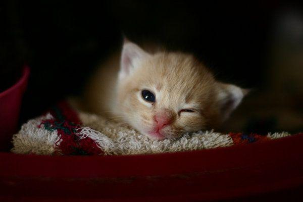 winking kitty by dreameyce flutter pinterest kitty and cat