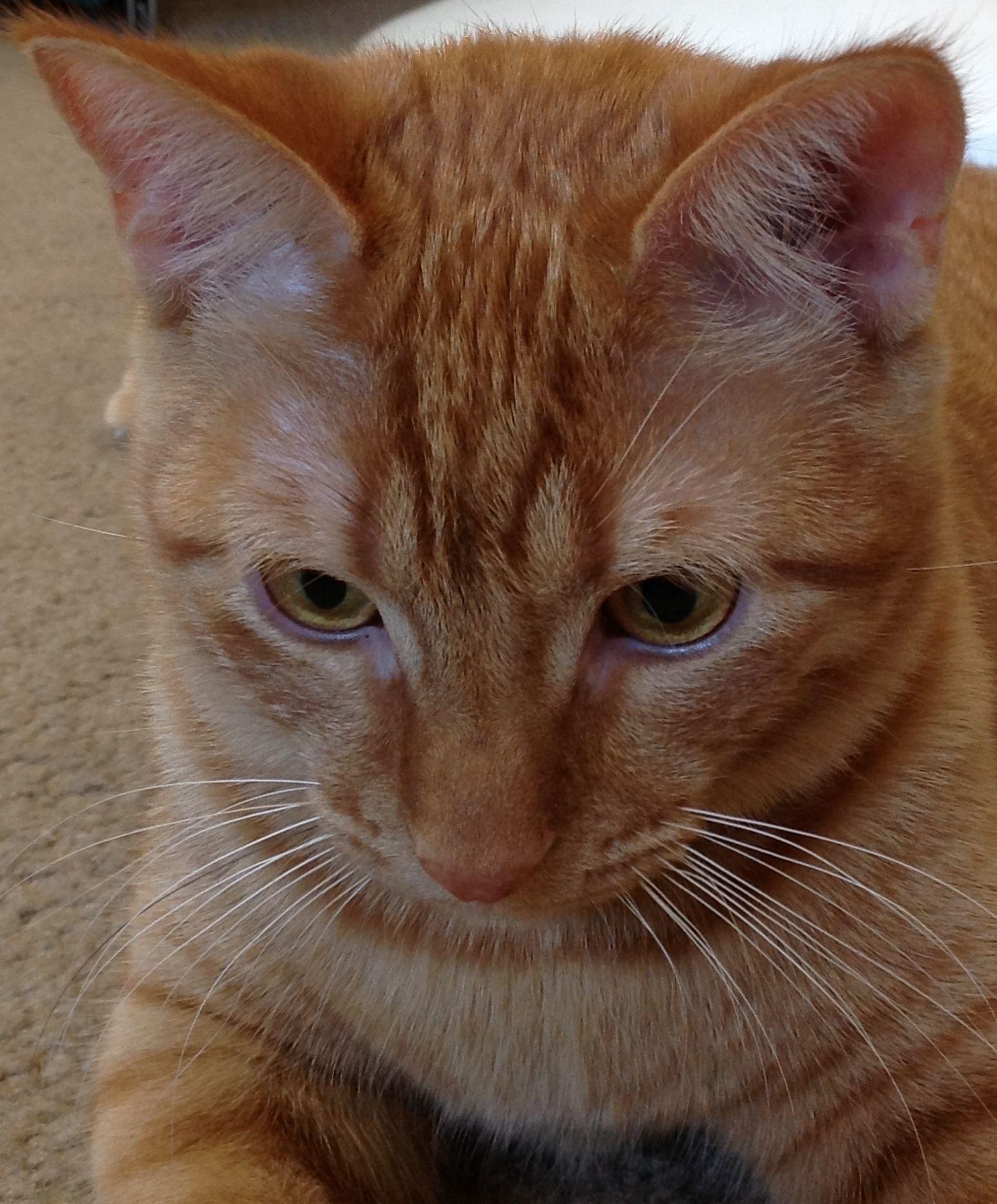 Sunny Orange Tabby Orange Tabby Cats Orange And White Cat Ginger Cats