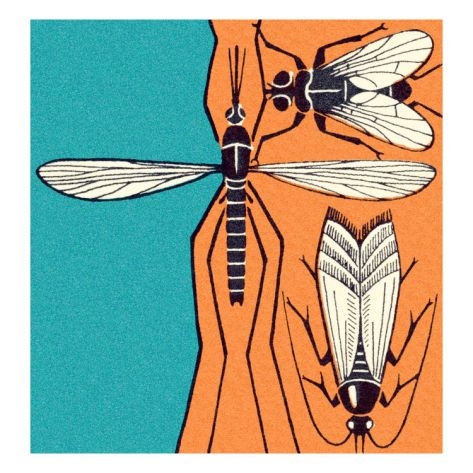 Three Insects on Tree Print by Pop Ink - CSA Images at Art.com