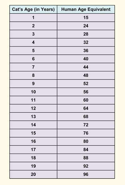Cat Age Chart Versus Human In Years