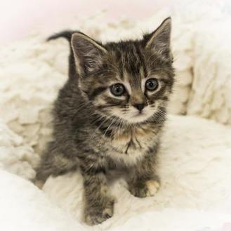 Adopt A Pet Petsmart Charities Pets Pet Adoption Pet Id