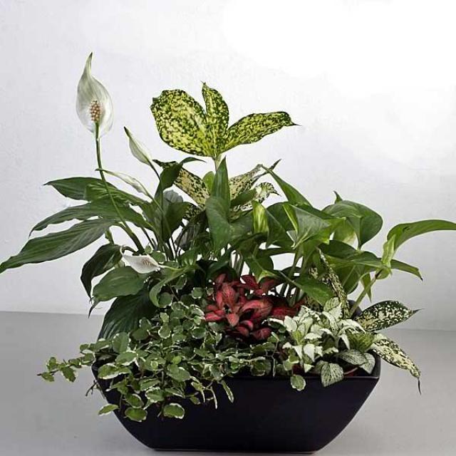 Mixed Indoor Plants In Basket Arrangement   Houseplants / Растения ...