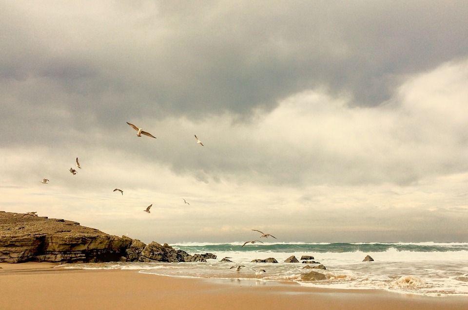 Free image on pixabay seaside seashore seagull beach