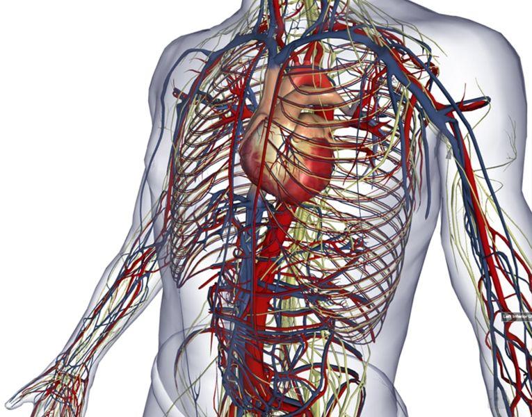 BioDigital: 3D Human Visualization Platform for Anatomy and Disease ...