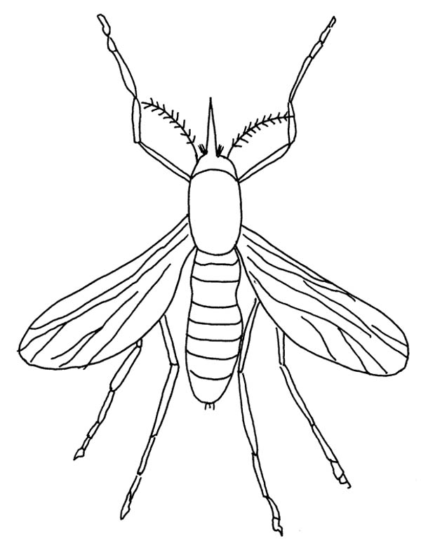 Mosquito Insect Coloring Page Coloring Sky Insect Coloring Pages Coloring Pages Bug Coloring Pages