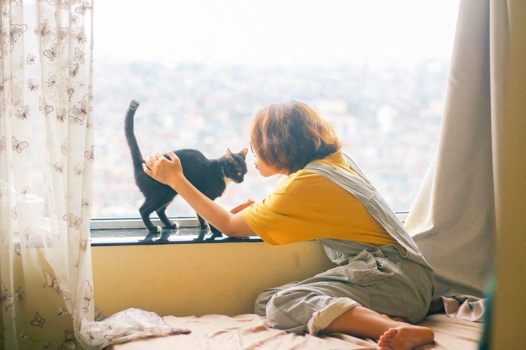 고양이 집사를 졸졸 따라다니는 이유 7가지 해변 포즈 고양이 포즈 참조 사진