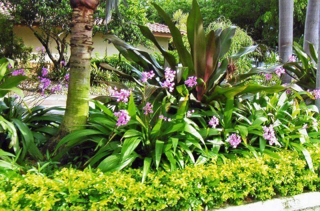 Stunning Tropical Landscaping Ideas Tropical Landscape Design