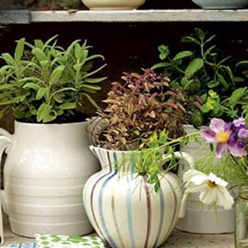 Decor Your Garden with Ceramic Jugs - Fashion Central