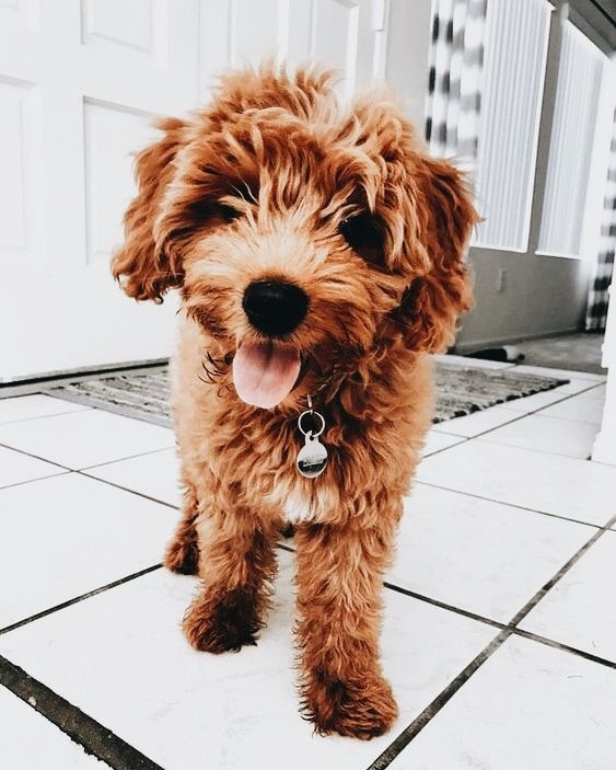 Pin Von Elise Abbey Auf Doggos Hundebabys Babytiere Haustiere
