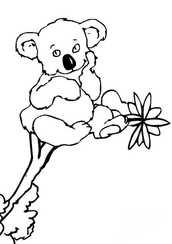 free online koala colouring page kids activity sheets australiana colouring pages
