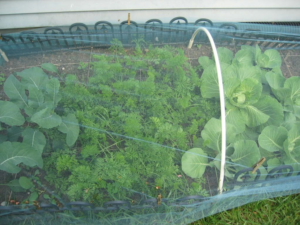 use tulle netting to cover my cabbages works great light weight