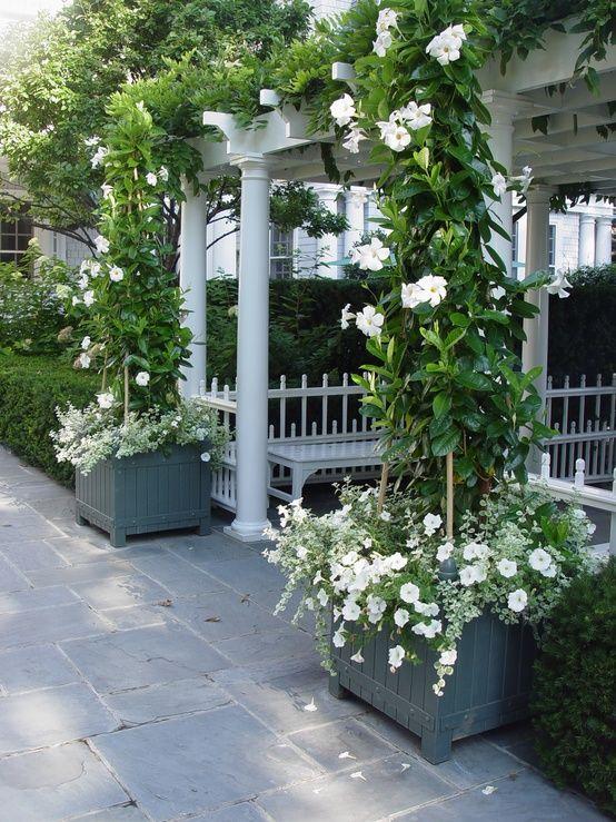 White Mandevilla and Petunias, How pretty. Progettazione