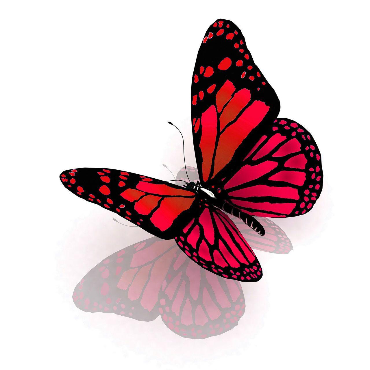 Pin By Edicleia On Babochki Butterflies Butterfly Painting 3d Butterfly Tattoo Butterfly Tattoo [ 1280 x 1280 Pixel ]