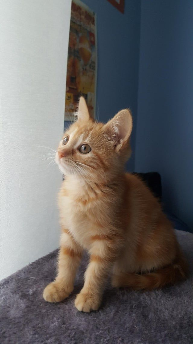 My sister heard a meow a few days ago in the street and since then we have been adopted by this cutie. Say hello to Loti!