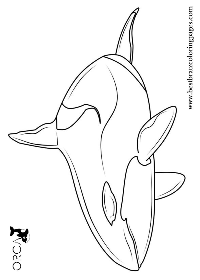 online coloring pages malvorlagen unterwasser tiere quiz 82