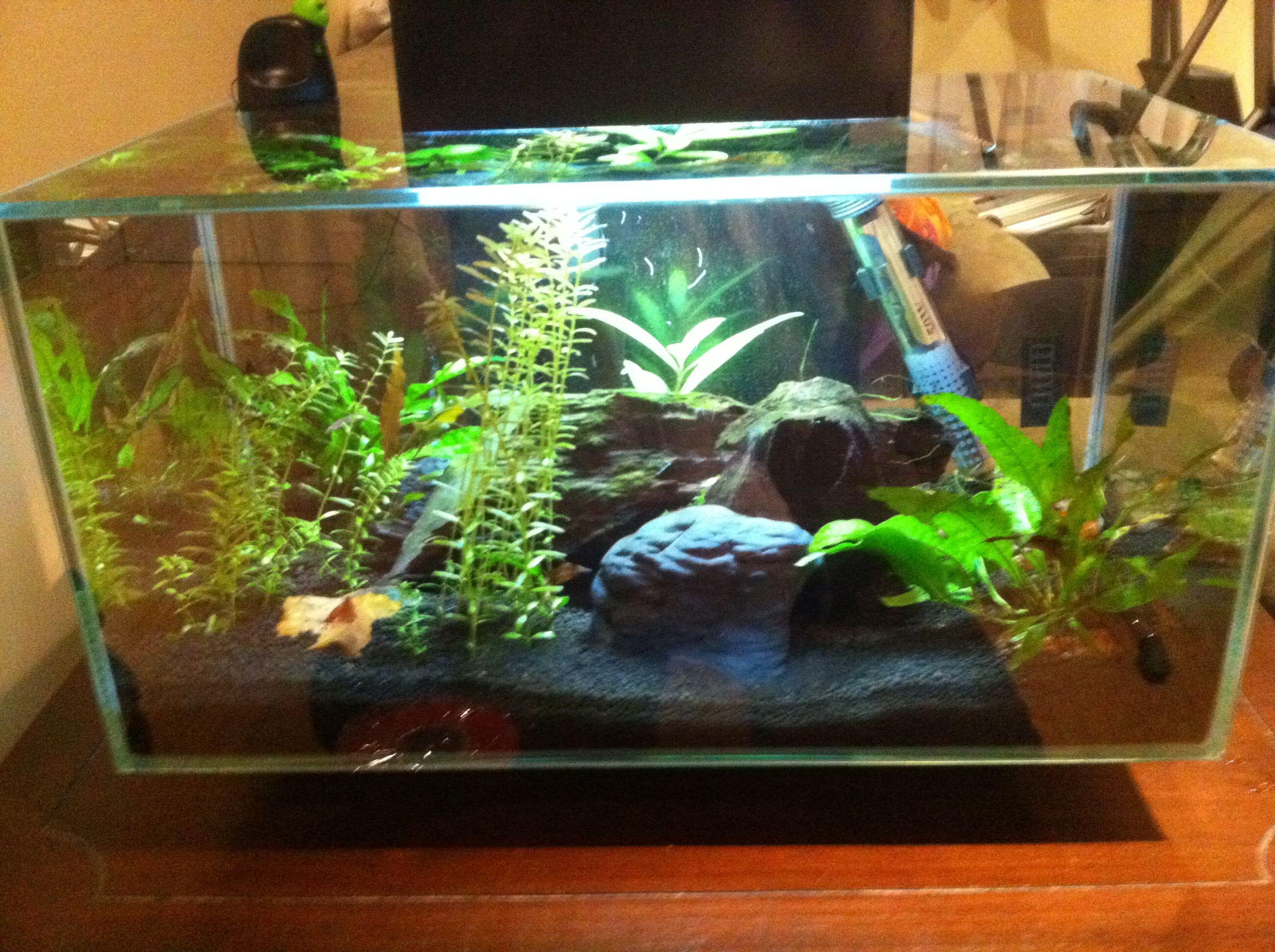 Fluval Edge Shrimp Tank Betta Fish