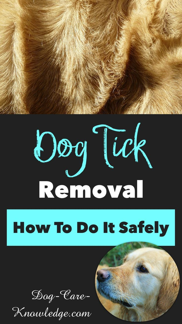 Dog tick removal this is how to do it safely ticks on