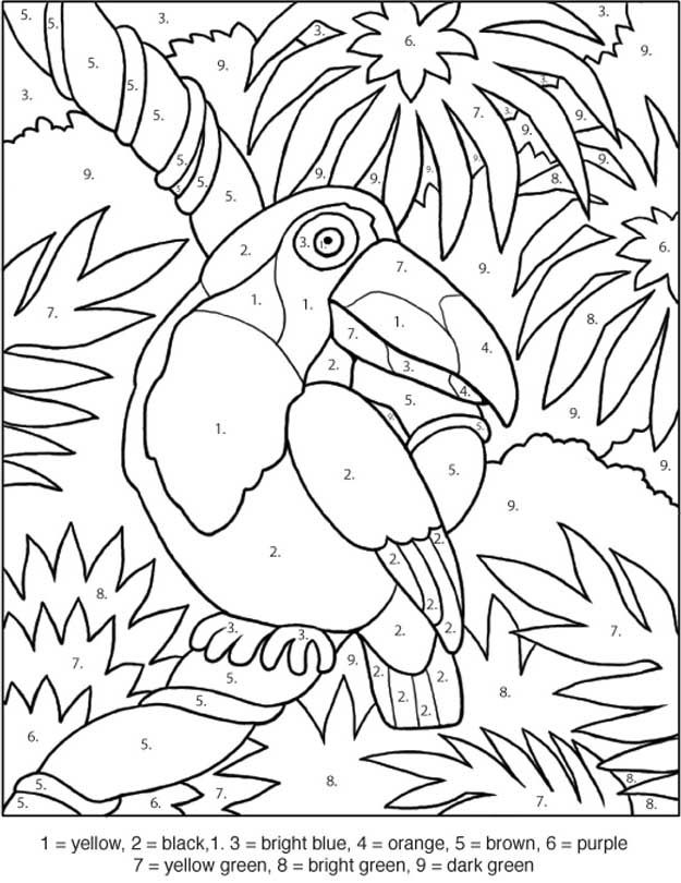 _ toucan coloring by numbers games the sun games site