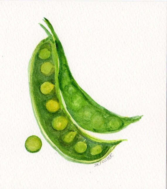 Original English Peas Watercolor Painting 4 X 6 Art Vegetable