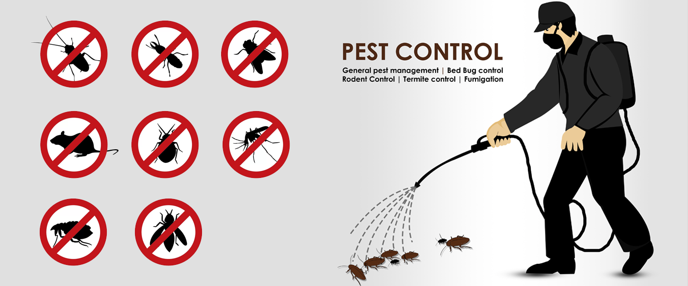 Pest Control Services Singapore Contact Execute Pest Control For Pest Control Services In Singapore We H Pest Control Pest Control Services Best Pest Control