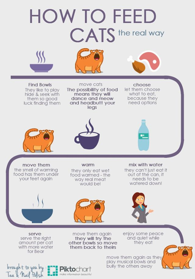 How To Feed Cats Infographic Cat infographic, Cat