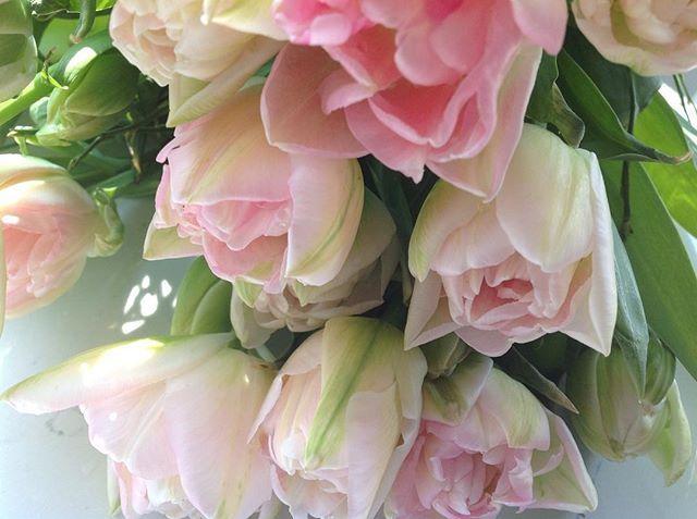 #tulipaner #tulips