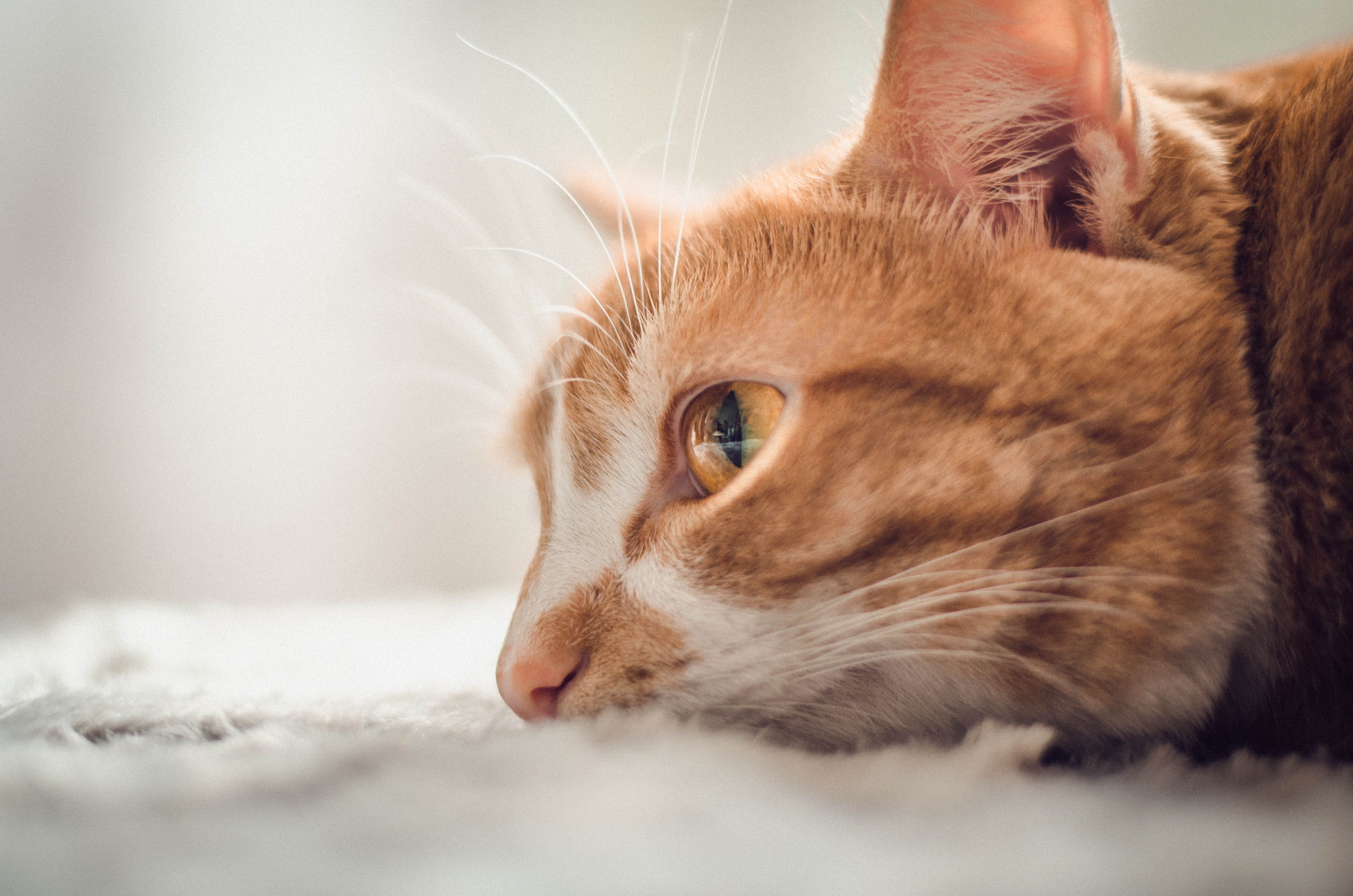 A cat's eyes have the power to speak a great language