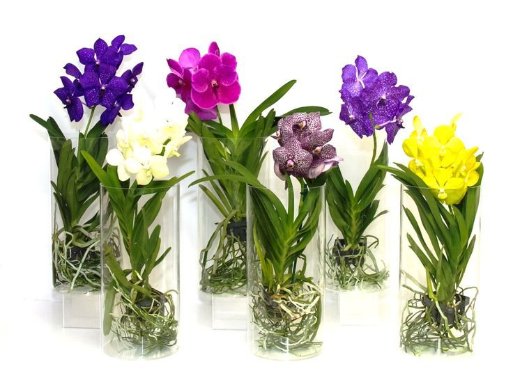 Vanda Orchids In Acrylic Vases By Silver Vase Inc Orchids Ideas