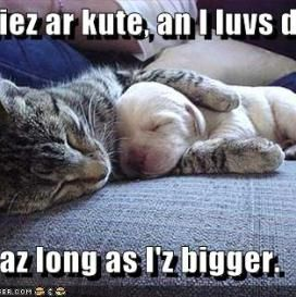 Funny Cat Vs Dog Quotes Cat Vs Dog Funny Dogs Funny Cats And Dogs
