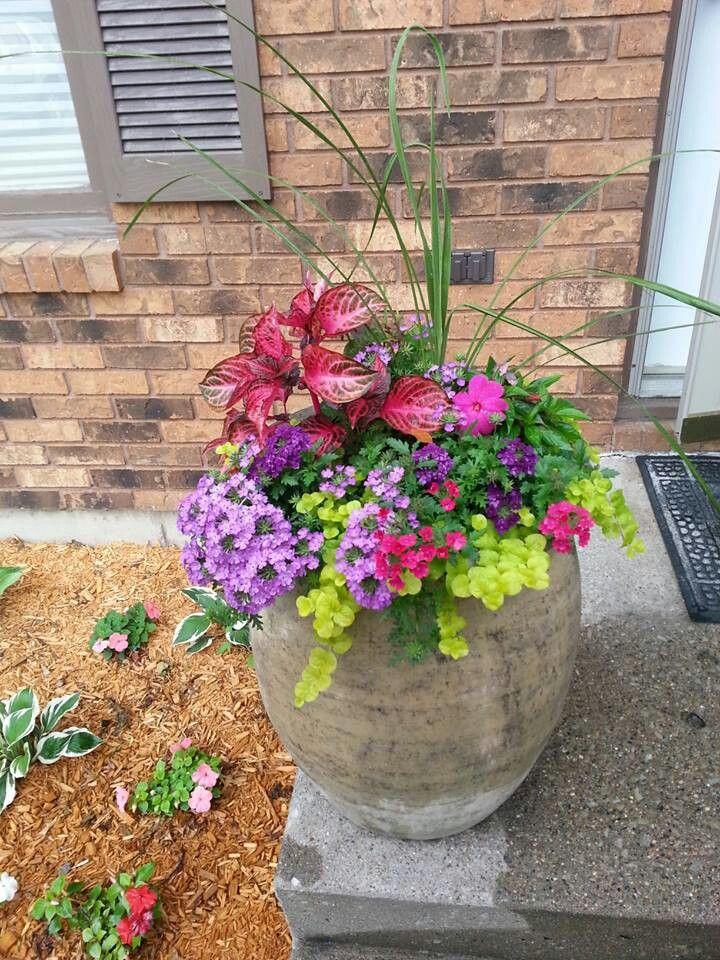My summer flower pot. Front porch flower pots, Flower