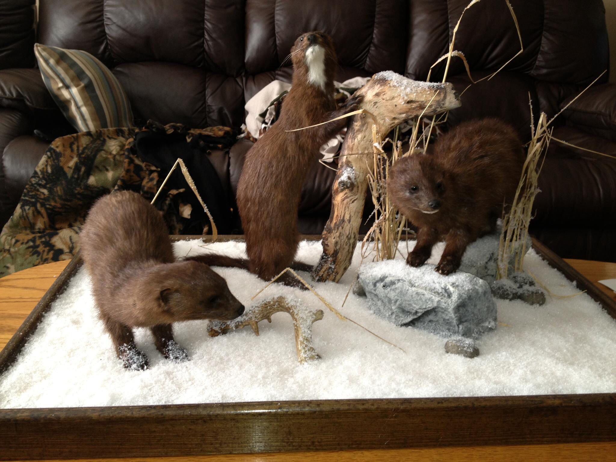 Triple life size mink mounts in the snow with custom base