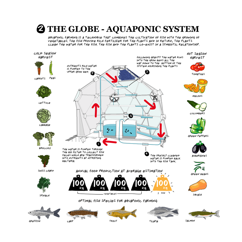 17 Best 1000 images about Aquaponics and hydroponics on Pinterest