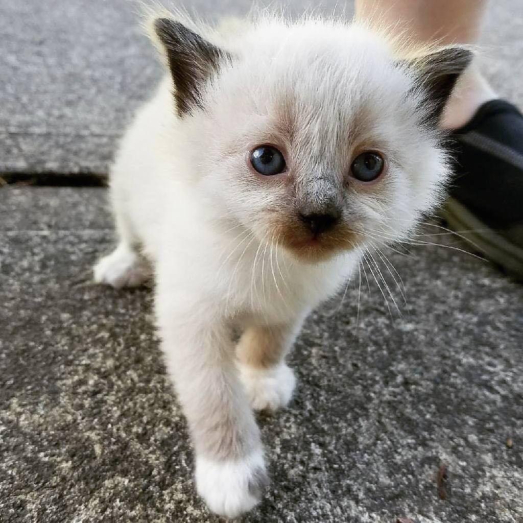 So süß! von _maryfuller_ kittens_of_world und