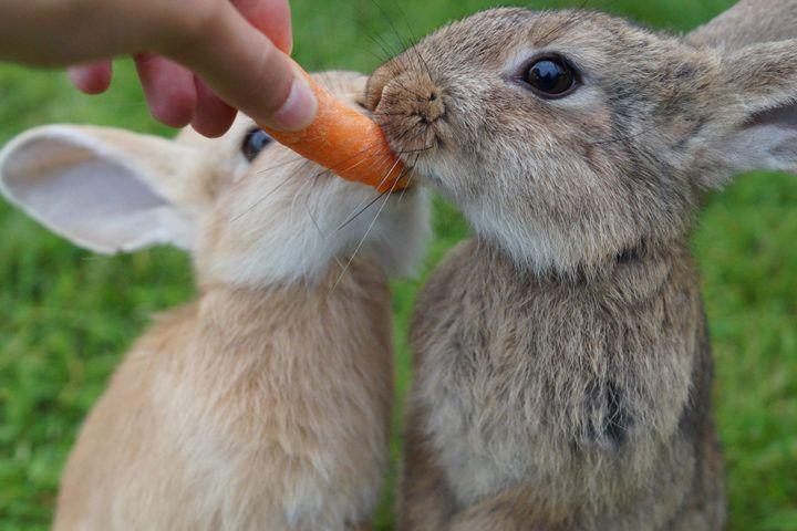 Plant a Bunny Garden: Food You Can Grow for your Pet Rabbit - Exotic Animal Supp... #Animal #bunny #EXOTIC #food #garden #grow #Pet