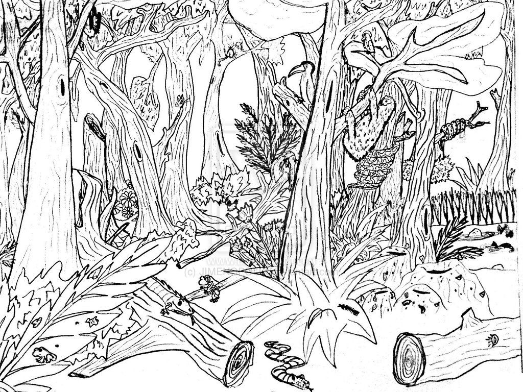 Hard Forest Animals Coloring Pages Color