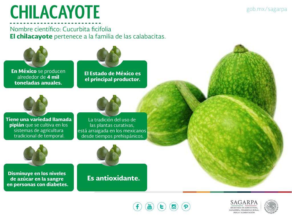 dieta de diabetes cucurbita ficifolia
