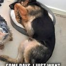 cute german shepherd Memes | ... on Pinterest | German Shepherds, German Shepherd Dogs and Gsd Puppies