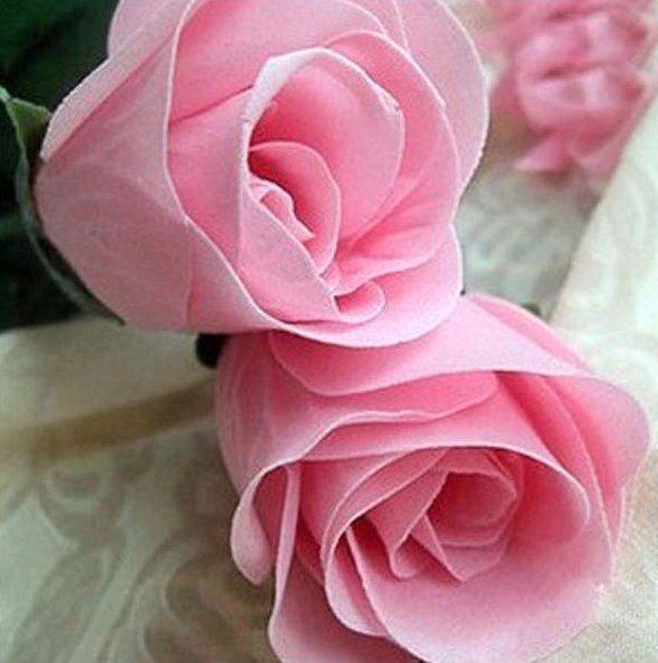 Gambar Bunga Mawar Pink 3 Tangkai Gambar Bunga Bunga Mawar Putih
