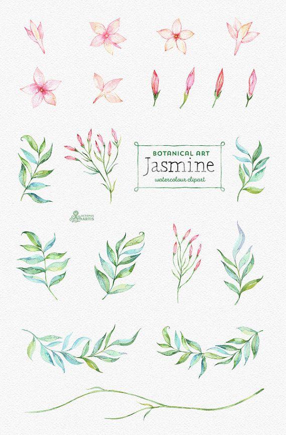 ad79105b6b751 Jasmine. Botanical art. Floral Elements, wreath, branch, watercolor ...