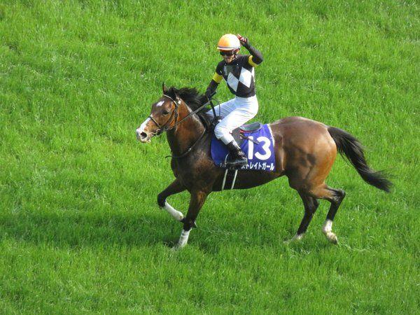 (第11回ヴィクトリアマイル)ストレイトガール連覇達成!7歳牝馬のJRA・GI勝ちは史上初めての快挙