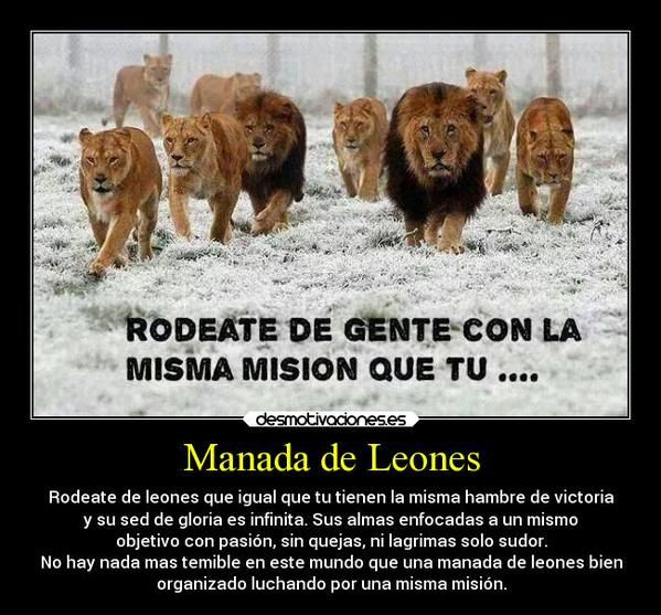 Manada De Leones Photography Animals Twitter Photography