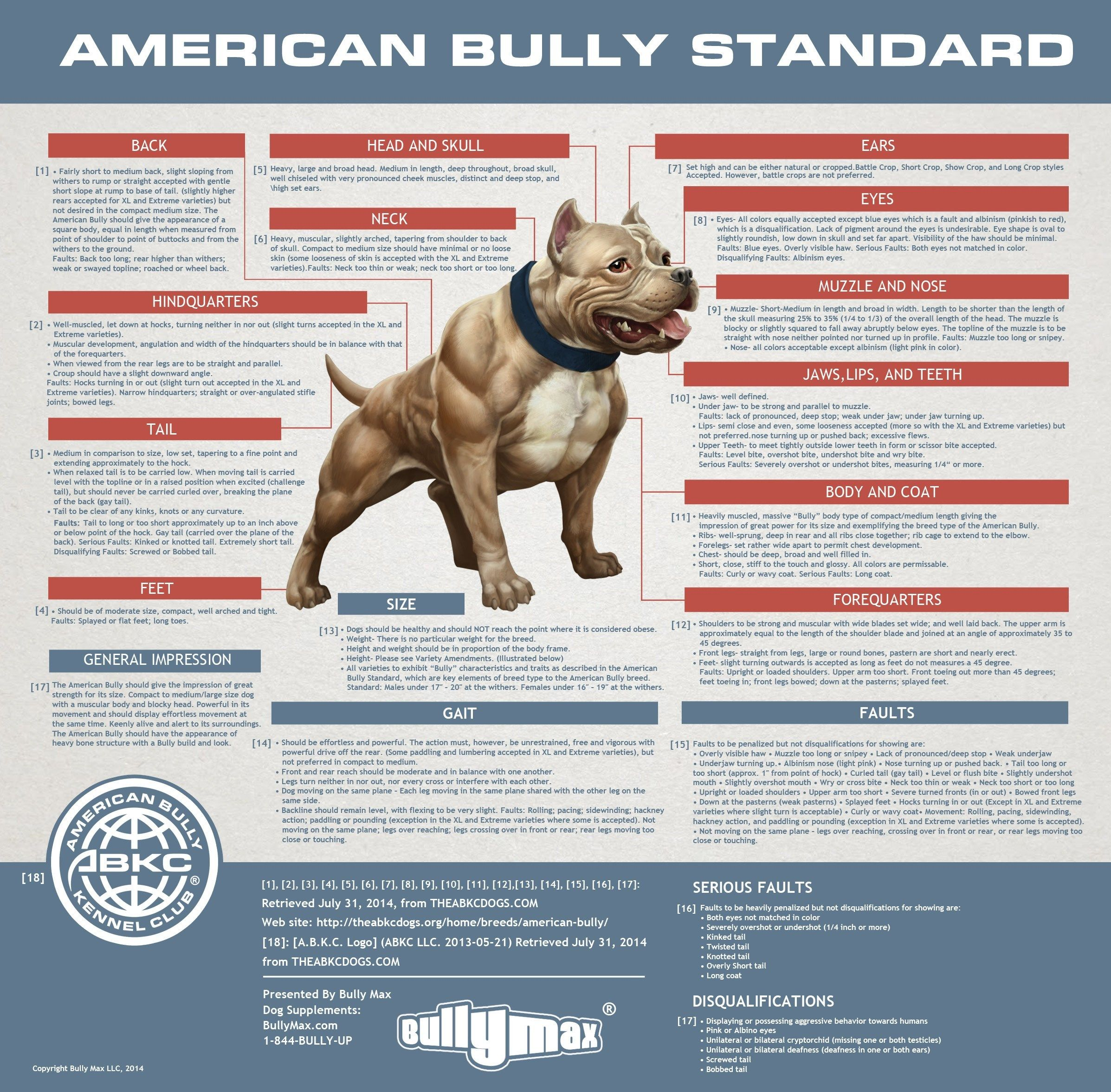 The American Bully Standards Terminology Of Structure Perros