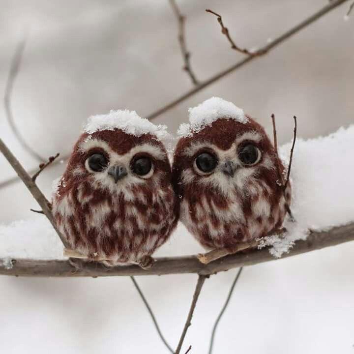 Two cute little baby owls.