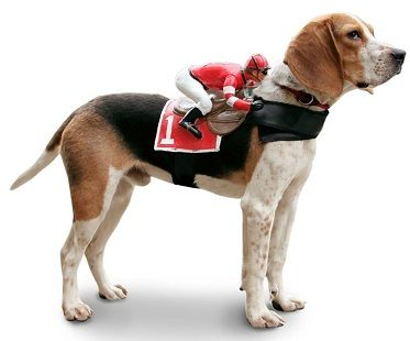 Jockey Rider Pet Costume Pet Costumes Pet Costumes For Dogs