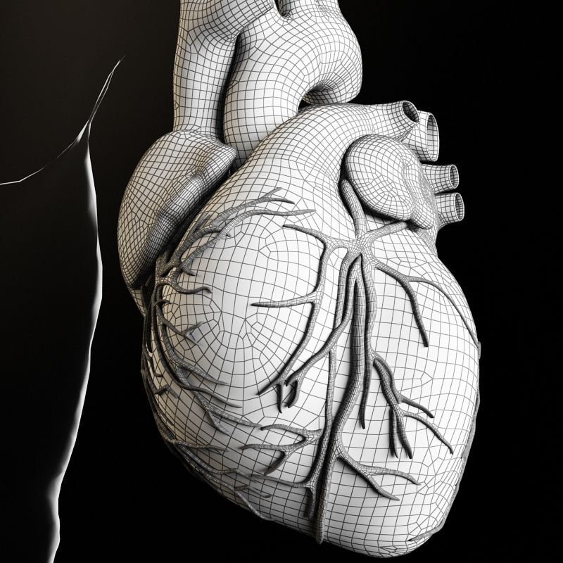 Heart and Body 3D Model Download | fbx obj max - 3D Squirrel ...