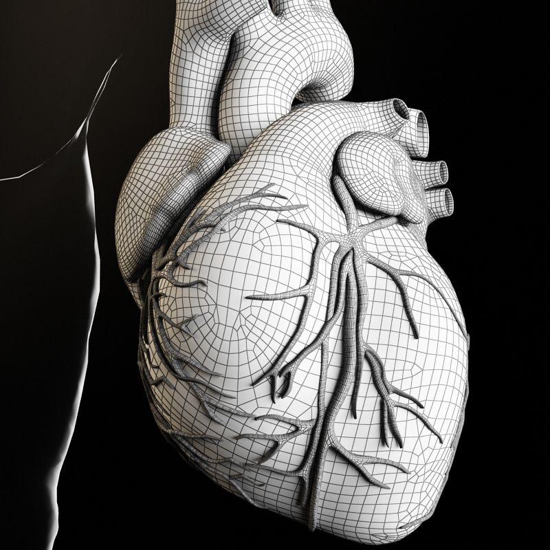 Gemütlich 3d Modelle Der Menschlichen Anatomie Ideen - Anatomie ...