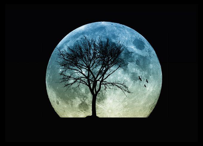 Image result for astrology signs Celtic Tree