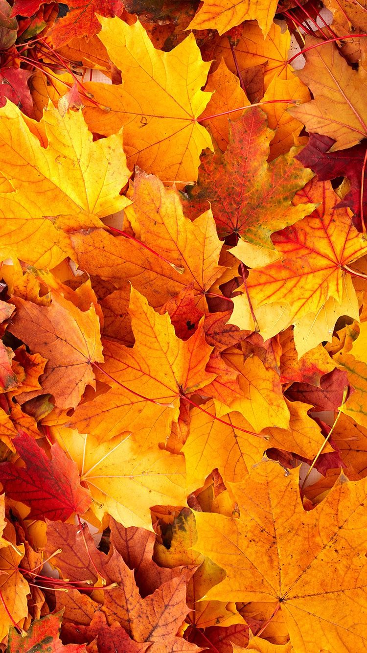 Pin By Tracy Goodwin On Iphone Wallpaper Autumn Leaves Wallpaper Cute Fall Wallpaper Fall Backgrounds Iphone
