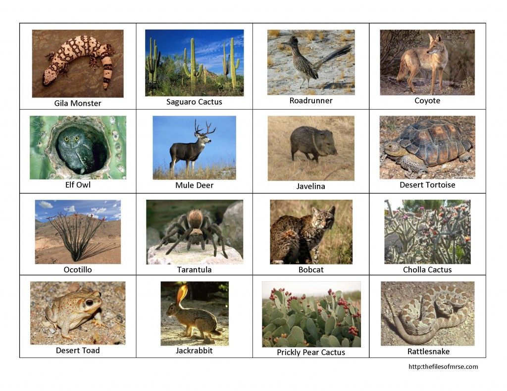 Desert Bingo Picture Desert Animals And Plants Desert Animals Desert Biome