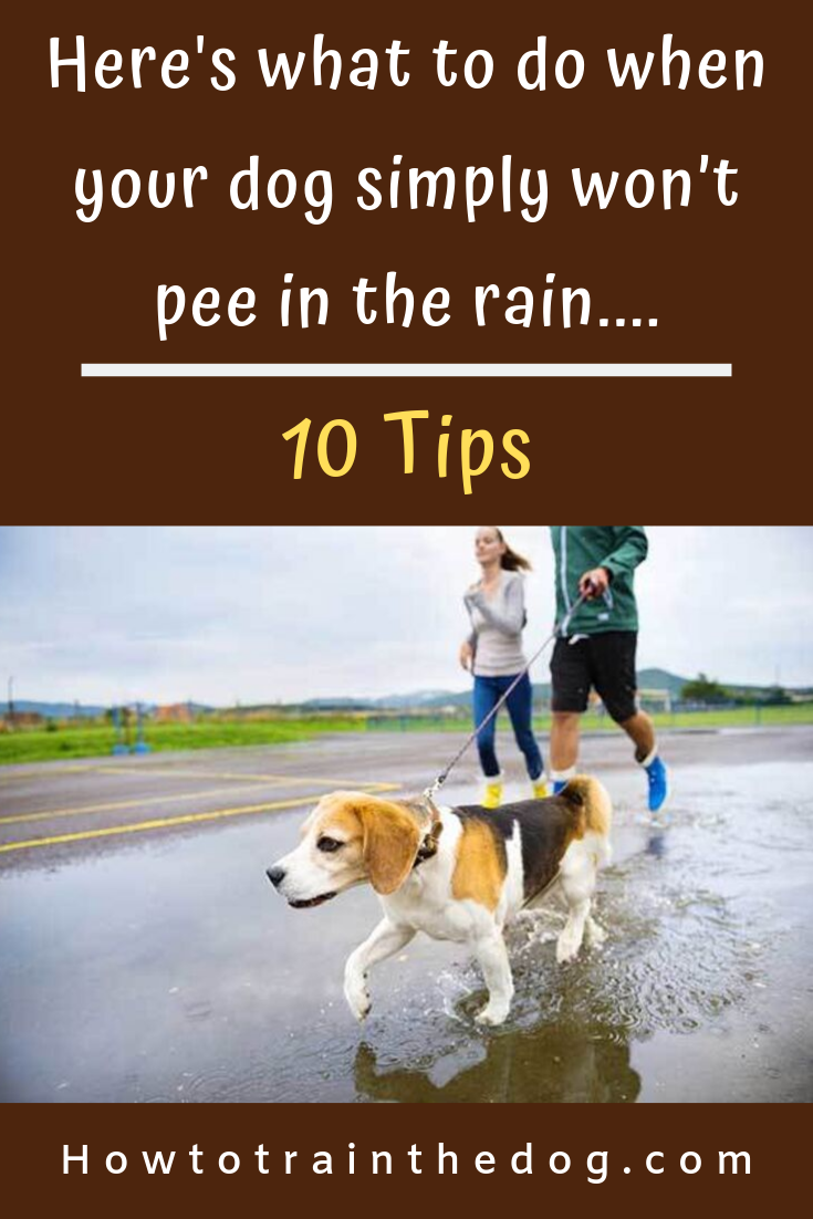 How To Get Your Dog To Potty In The Rain 10 Tips Dog Potty Dogs Your Dog